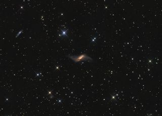 NGC 660 by Ron Brecher