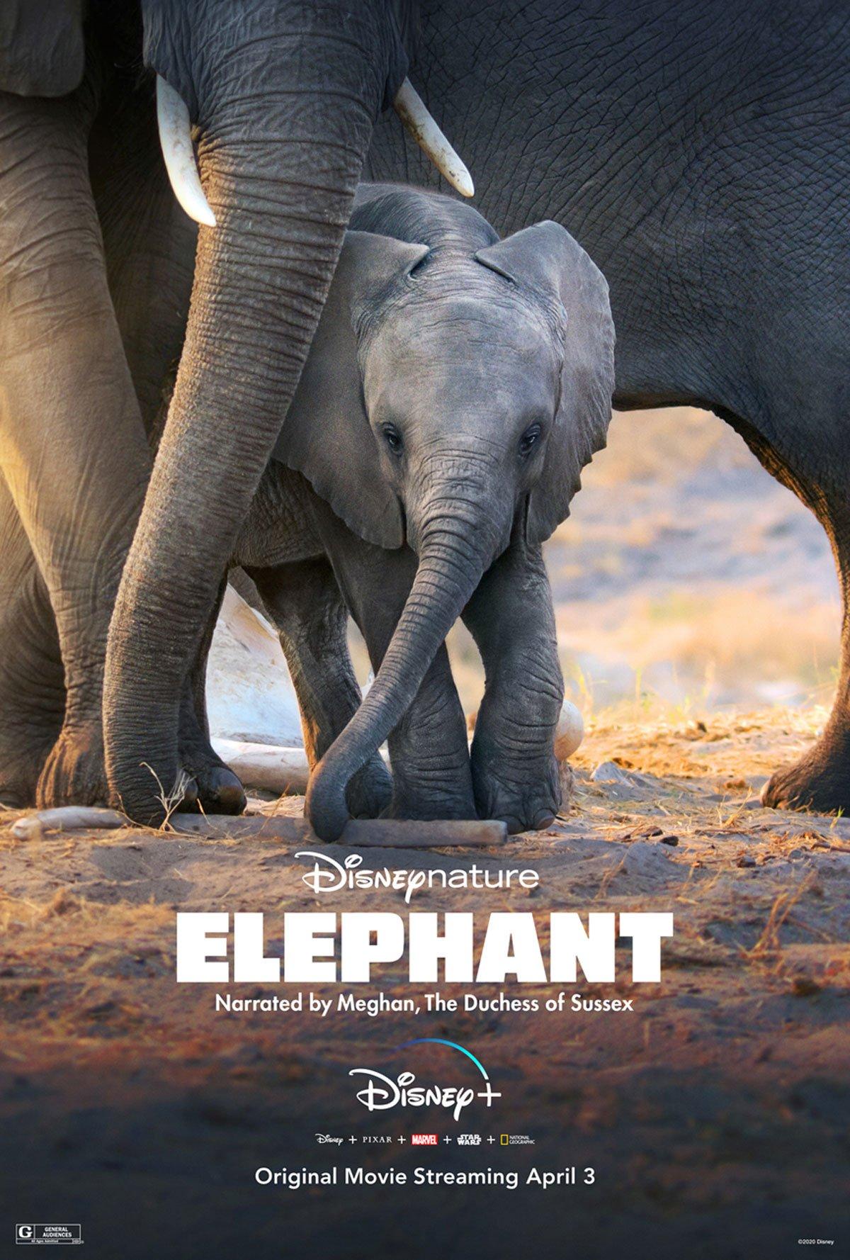 Elephant poster on Disney+