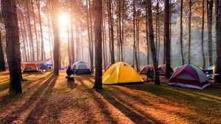 A group of various tents in a forest