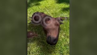 A 3D model of a horse's severed head appears to lie on a patch of grass.