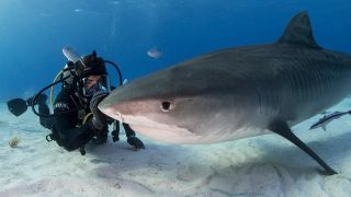 """Director Eli Roth visits with a shark in his documentary, """"Fin."""""""