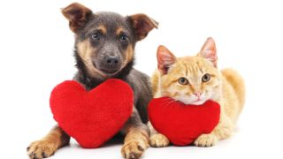 Cat and dog with red hearts isolated on white background.