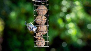 back garden bird photography