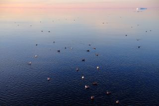 Seabirds in Arctic