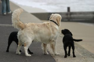 Why Do Dogs Wag Their Tails? | Live Science