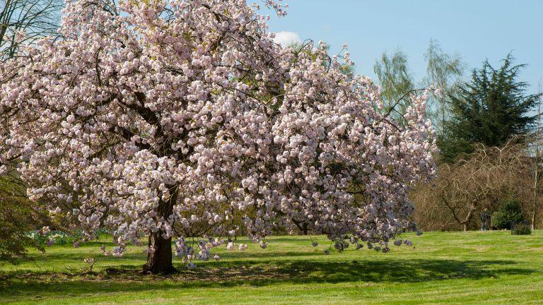 best flowering trees: blossom tree