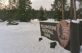 Tourists ride snowmobiles through Yellowstone National Park.