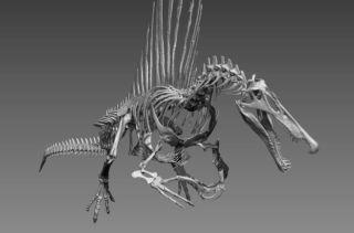 skeletal reconstruction of Spinosaurus aegyptiacus.