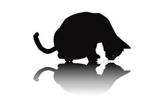 Cartoon cat peering at its shadow