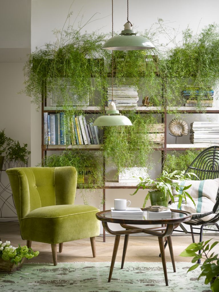 living room with overwhelming collection of houseplants