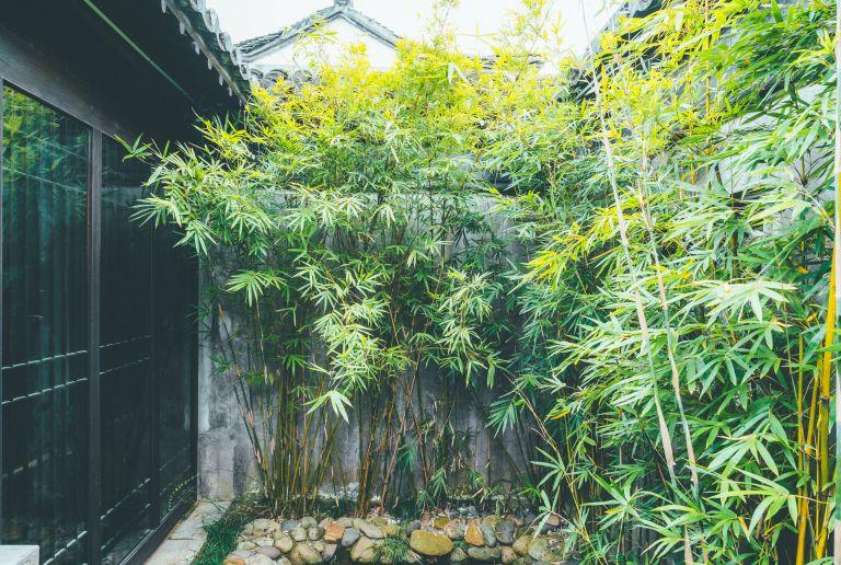 how to grow bamboo: