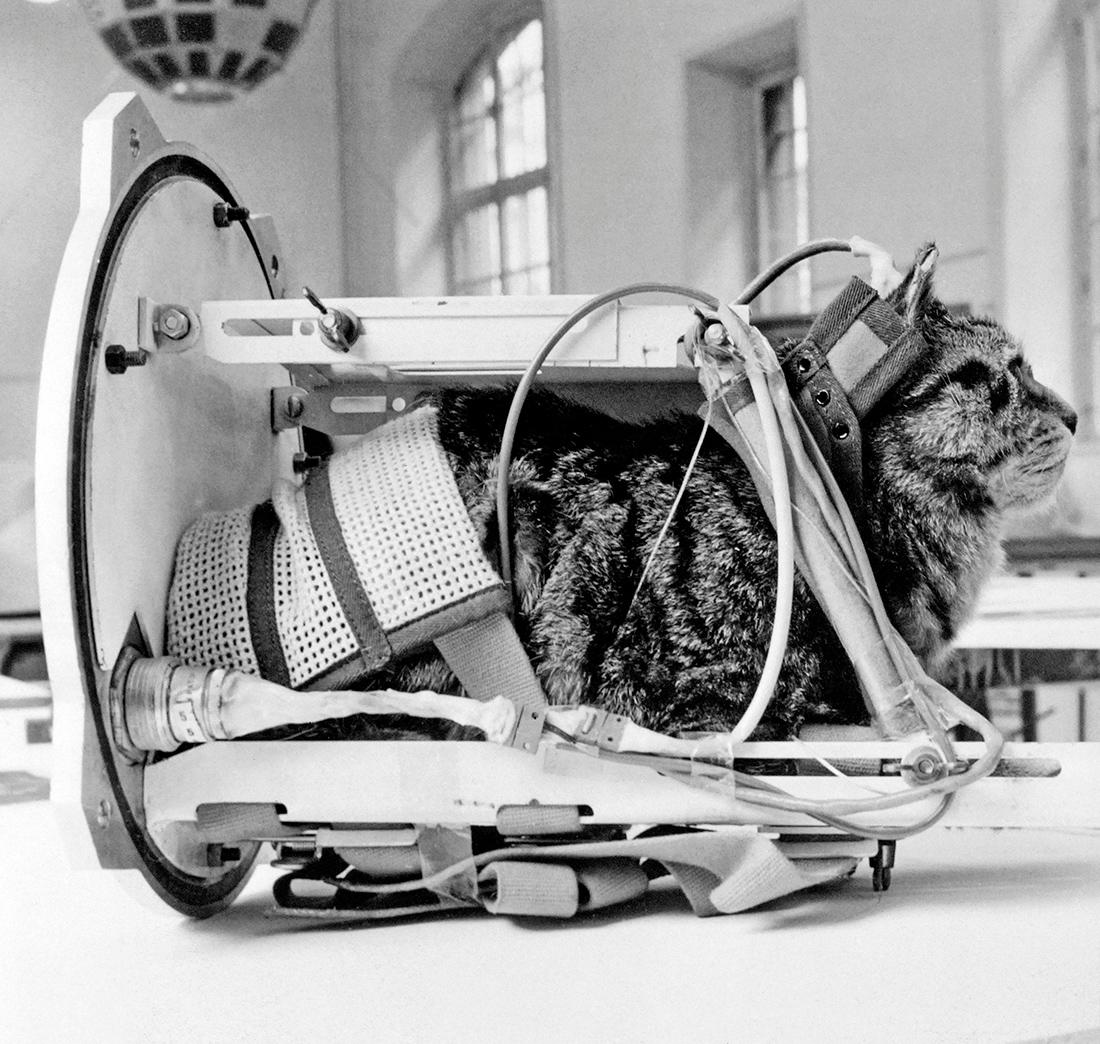 First Cat in Space to Receive a Proper Memorial | Space