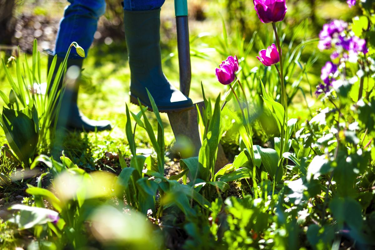 These are the top 3 natural fertilisers recommended by a gardening expert