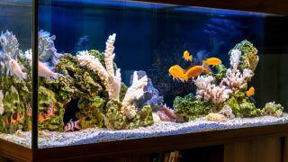 Best tropical fish tanks