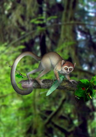 Artist's impression of ancient primate
