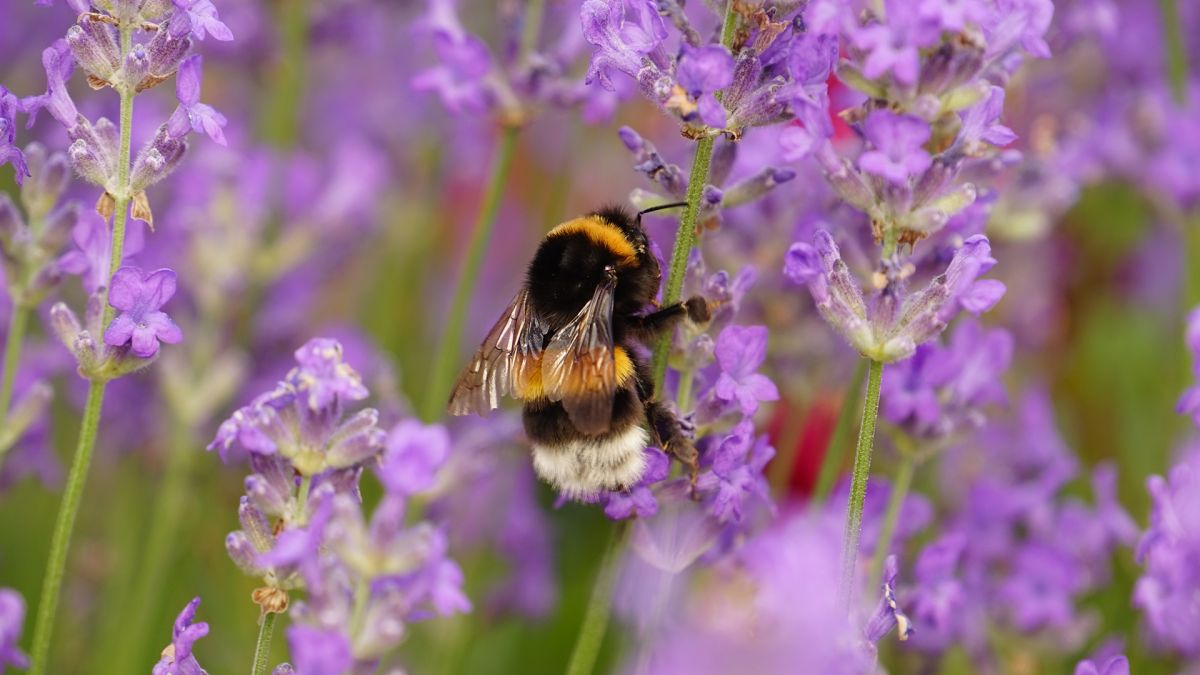 12 beautiful bee friendly plants to try in your garden