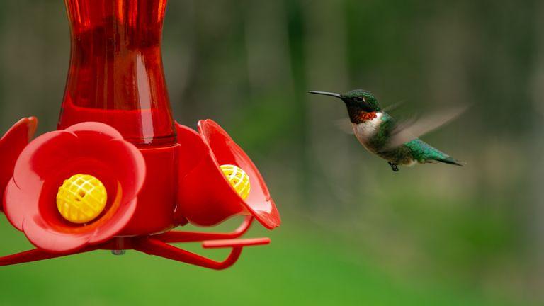 Hummingbird flying towards a hummingbird feeder