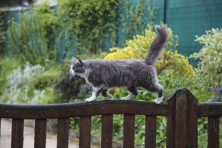 Plants that are poisonous to cats: cat on fence