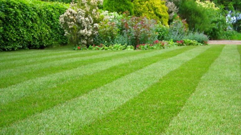 the best weed killer: lawn free of weeds