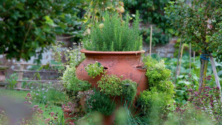herb planter ideas