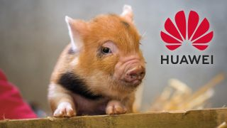 Huawei turns to pig farming and coal mining as phone sales drop 42%