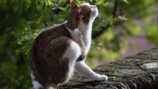 How do cats get fleas? Image of cat scratching outside