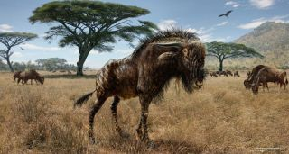wildebeest-like animal with hadrosaur nose
