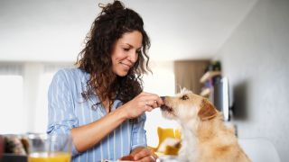 How much does your dog love you? Dog being fed by woman