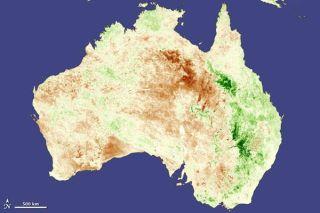 australia-vegetation-110628-02