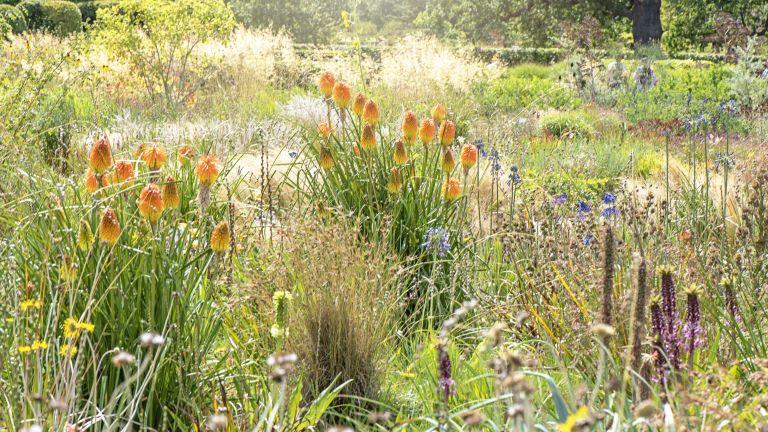 best drought tolerant plants: Red hot poker in prairie style garden border