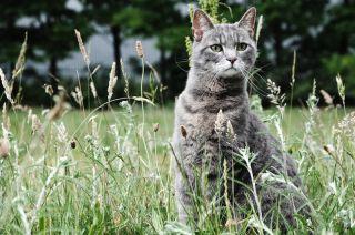 A cat in a field