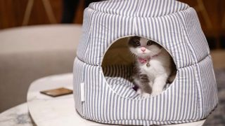 How to choose the right cat bed