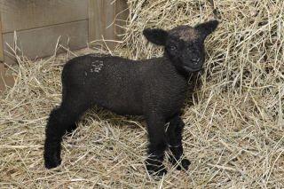 lamb-110902-02