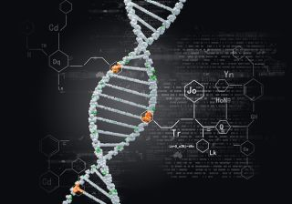 A photo of DNA.