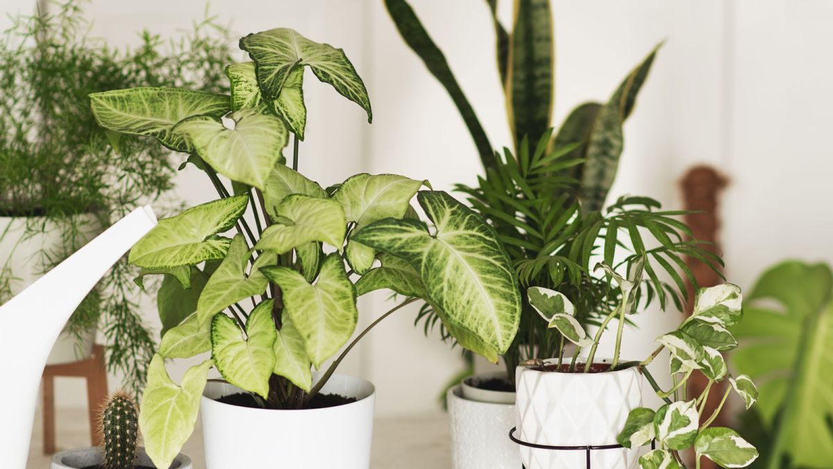 The most valuable houseplants revealed - do you own any of them?