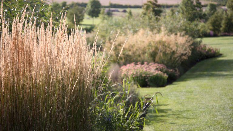Ornamental grasses in a garden field