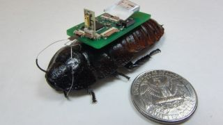 "Researchers are testing ""cyborg cockroaches"" equipped with microphones to see if they could be used to hunt for disaster survivors."
