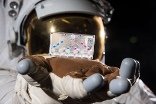 During the International Space Station's Expedition 64, investigations utilizing organ-on-a-chip technology will include studies on muscle loss, lung function, and the blood brain barrier — all on devices the size of a USB flashdrive.