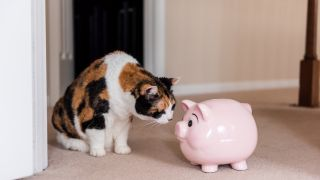 Cheaper pet insurance