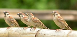 Birds on a perch, biodiversity, chemicals, environmental impact