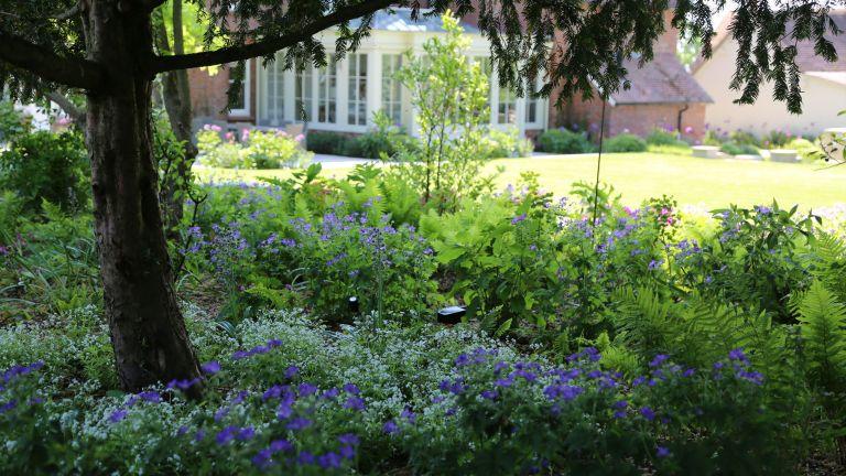 best plants under trees: rosemary coldstream garden design woodland planting