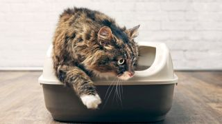 urinary tract infections in cats