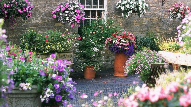 container gardening ideas: petunias on patio