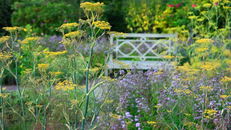 Wildlife garden ideas – 10 ways to transform your backyard into a nature-friendly plot