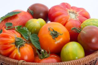 A basket of colorful, organic heirloom tomatoes.