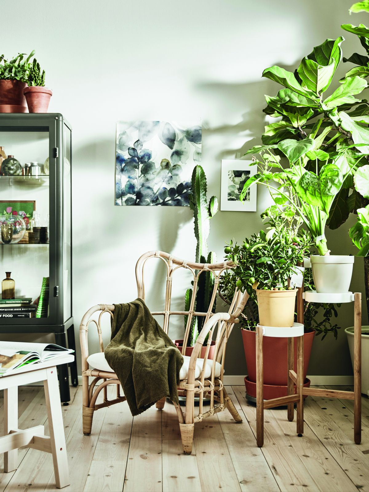 House plants: 19 gorgeous display ideas to brighten up ...