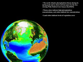 phytoplankton-blooms-100720-02