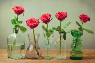 Live Science & Vodka Aspirin or 7Up: What Keeps Flowers Fresh? | Live Science