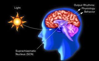 master clock in the brain