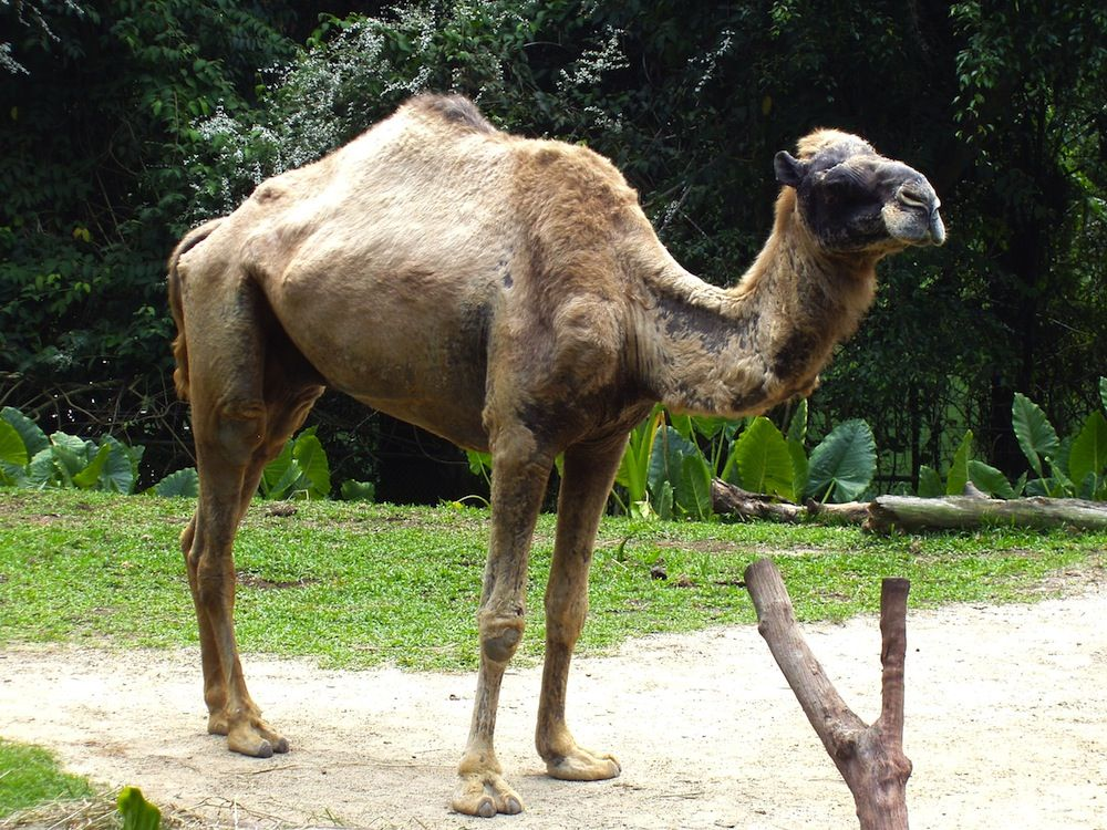 Camels: Facts, Types & Pictures | Live Science